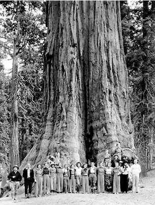 General Grant Tree, a giant sequoia, in 1936. Giant sequoias occur naturally in only one place on Earth—the western slope of the Sierra Nevada mountain range in California, on moist, unglaciated ridges and valleys[8] at an altitude of 5,000 to 8,000 feet (1,524 to 2,438 m) above mean sea level.
